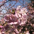 春~の記事より