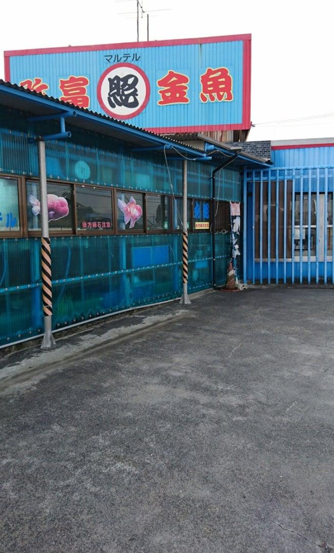 養魚 場 照 丸 丸照養魚場!3月21日レポート。