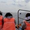 2月11日 子クジラ連続ブリーチの画像