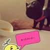 超期間限定&猫の日の画像