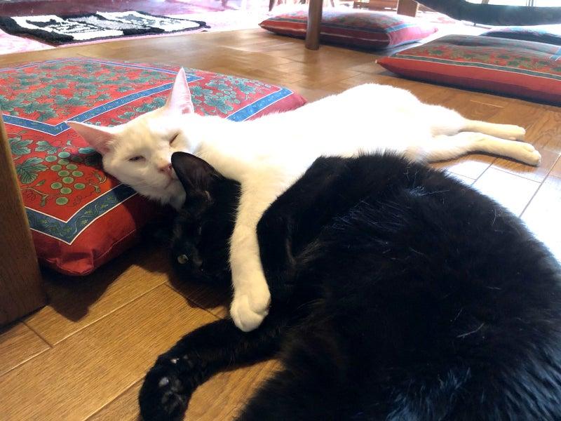 仲良し猫のイメージ