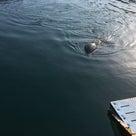 イルカに会いに!! ~ドルフィンファームオートキャンプ場~の記事より