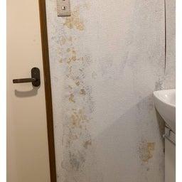 画像 脱衣所の壁がカビだらけ⁉︎ の記事より 2つ目
