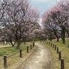 荒山公園の梅林の画像