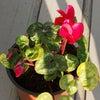 さらに開花!の画像