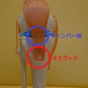 子供のオスグッドとジャンパー膝の見分け方の画像