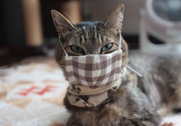 マスク ネコ 接触冷感3D洗えるネコマスク│ベルーナ
