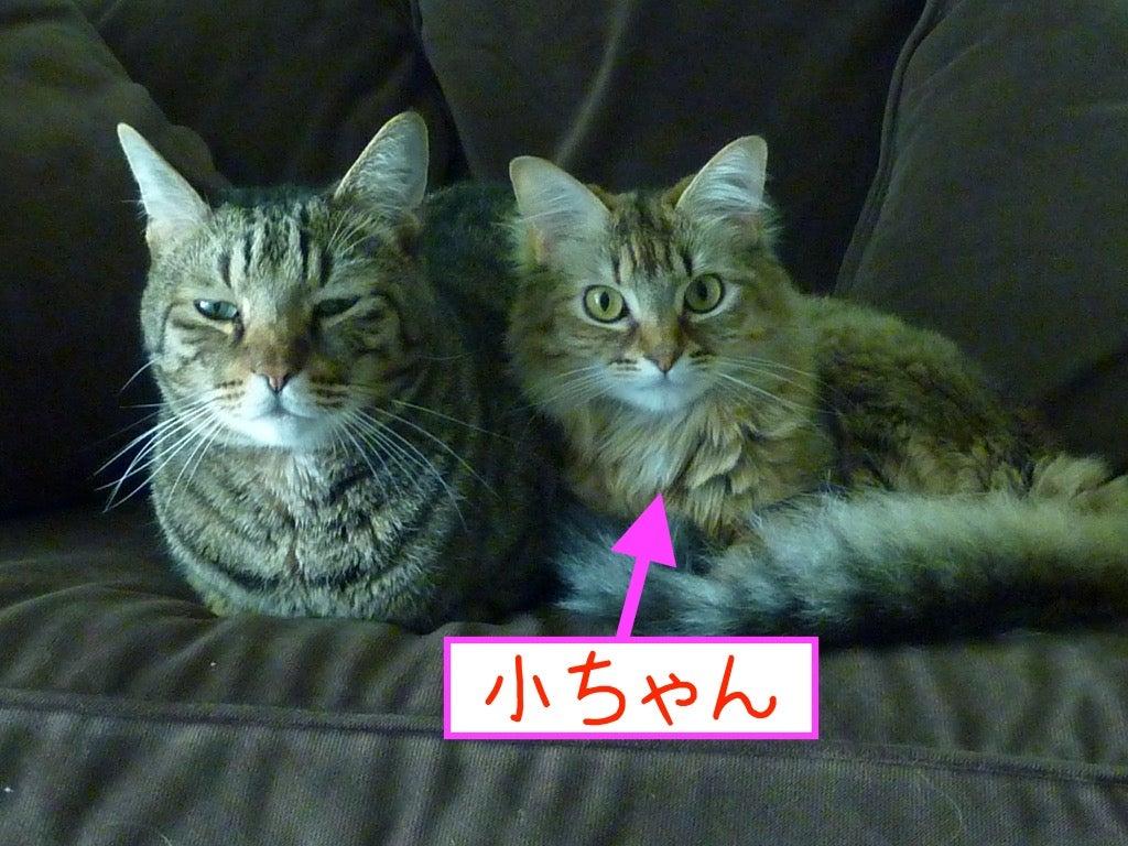 甲状腺 症 亢進 猫 機能