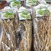 アスパラガスの苗が入荷しましたの画像