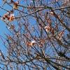 春の陽気の画像