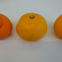 画像 柑橘 の記事より