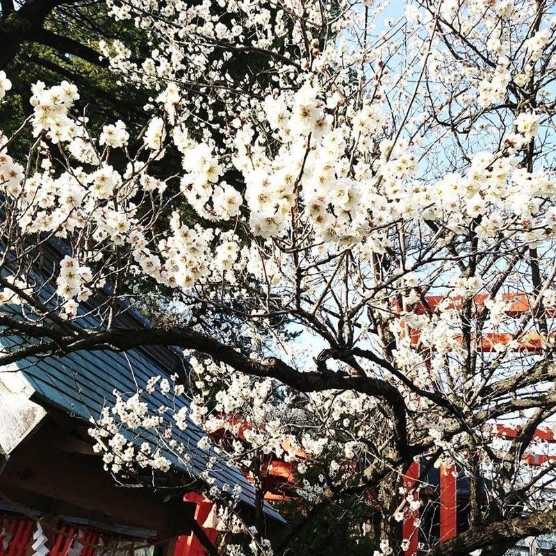 なし 東風 あるじ 吹か と な を 忘 おこせよ 梅 る ば ひ 意味 春 匂 て の 花
