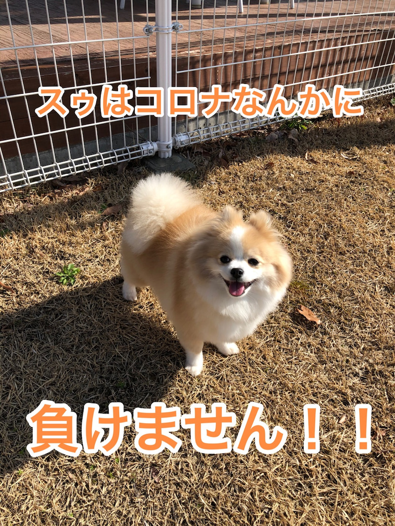 神戸 ネスタ コロナ リゾート
