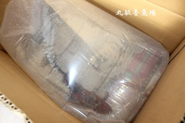 金朝水_朱文金・水作エイトコアL。|丸敏養魚場の日記