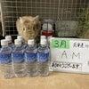 ソルトくんのお水ありがとう!!!の画像