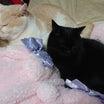 とろけるようにスヤスヤ眠れる猫を一頭でも増やす「とろねこチャレンジ」