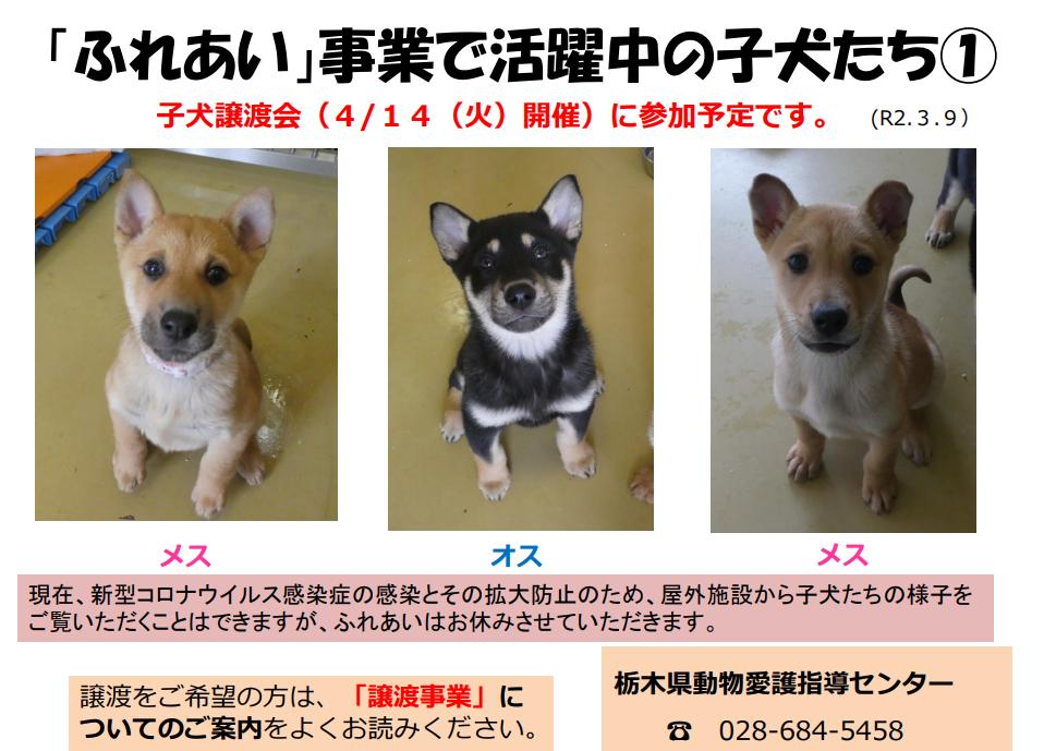 保護 犬 譲渡 会 埼玉 埼玉県の保護犬|里親募集|ジモティー