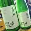 萩の鶴 さくら猫の画像