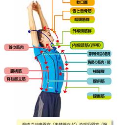 画像 ボイストレーニング研究遍歴9 の記事より 2つ目