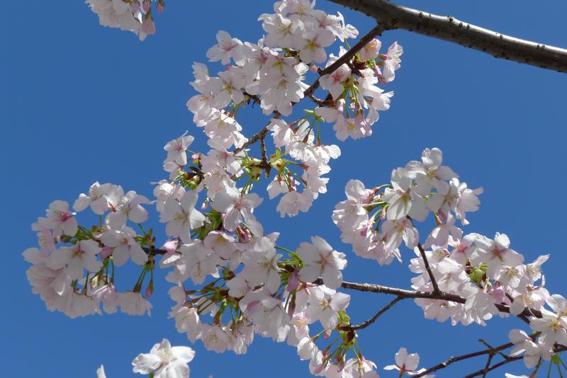 鎌倉散策 『鎌倉殿と十三人』五、平家滅亡 | 鎌倉歳時記