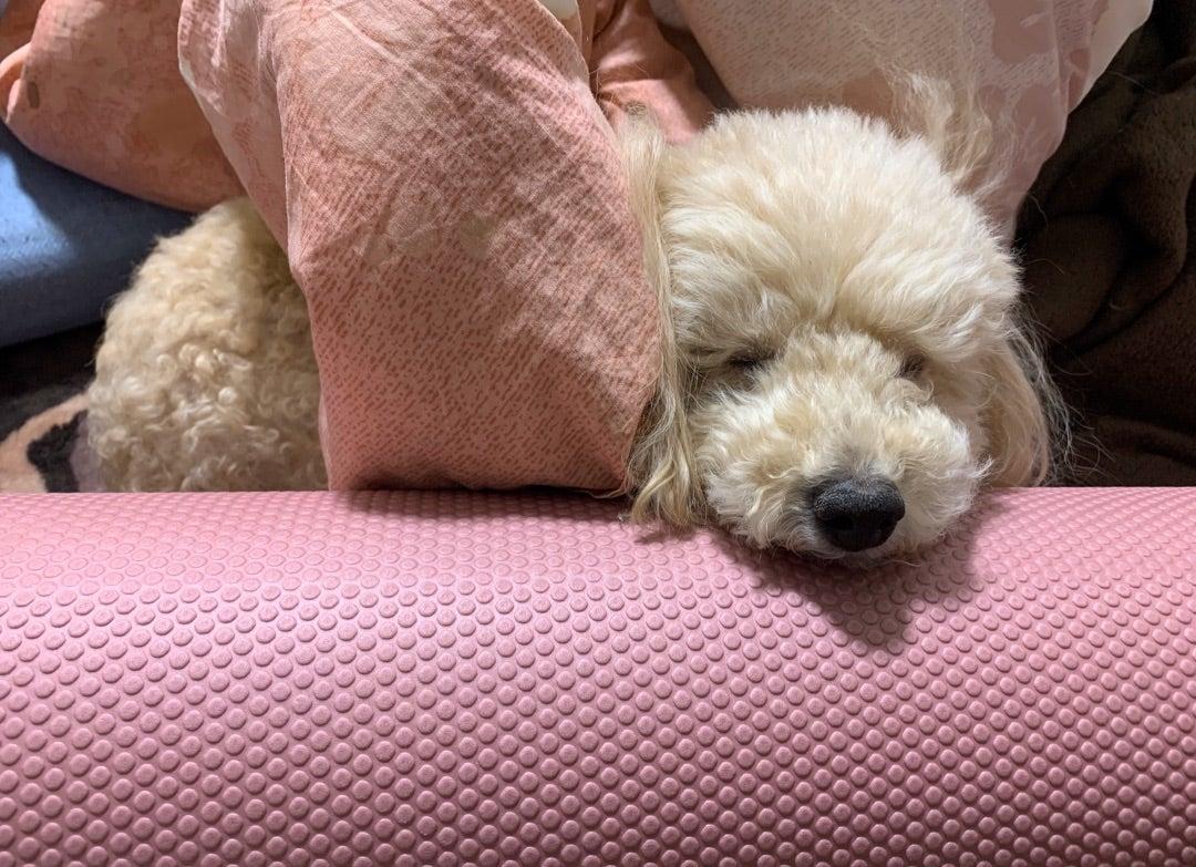 愛犬との癒しの時間♡
