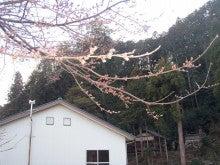 20203.8穴洞作業場桜