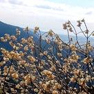 大野山~シダンゴ山をパトロール♪♪の記事より