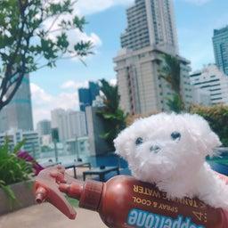 画像 バンコク・THAILAND :モデル事務所➕撮影募集 2020年6月 の記事より 3つ目