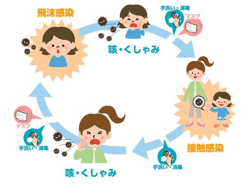 ウィルス感染サイクル