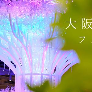 大阪光の饗宴フォトコンテスト展示中!今年も審査員&TV出演しましたの画像