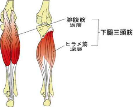下腿三頭筋を鍛えよう | 県相サッカー部