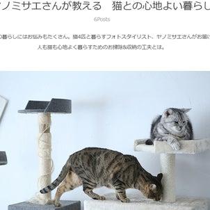 【連載】シニア猫にあわせた暮らしのお話/HOUSTO おウチの収納.comさんの画像