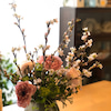 我家に春がの画像