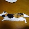 3/22 前編(いつもの猫ブログと パニーニちゃんのお届け)の画像