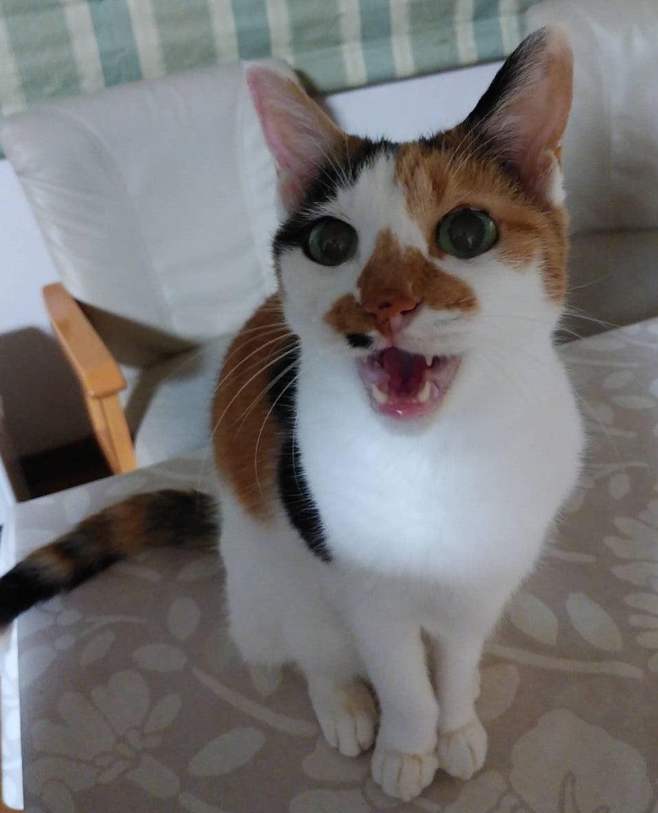 亢進 機能 症 甲状腺 猫