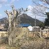 風が強いですね。今日は木の話です。の画像