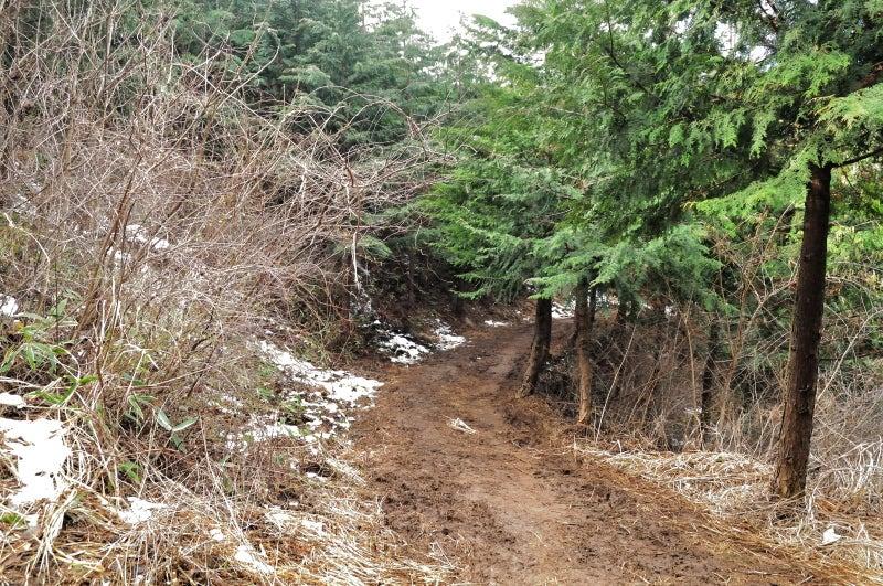 鶏足山・焼森山136