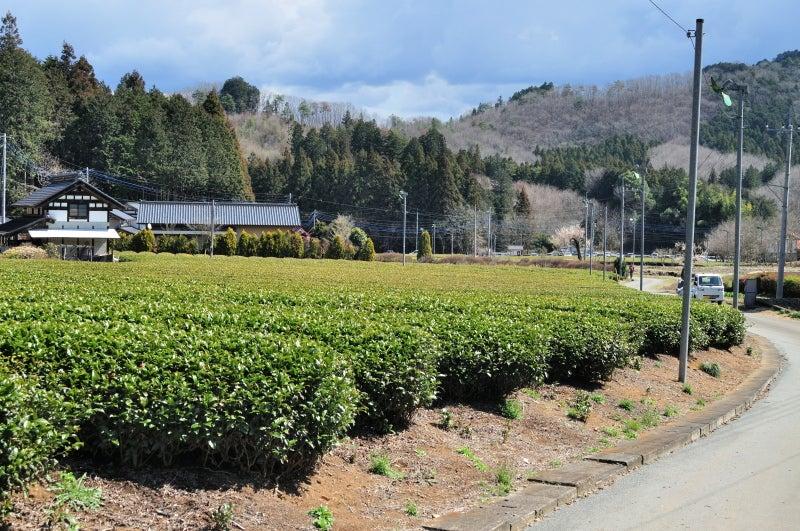 鶏足山・焼森山164