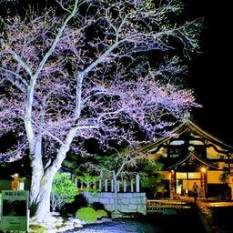 画像 【京都】秀吉が宿所にしていた日蓮宗大本山「妙顕寺」でいただいたステキな【限定御朱印】 の記事より 32つ目