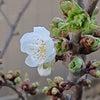 春♪の画像