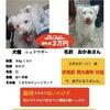 京都市伏見区 犬の迷子の画像