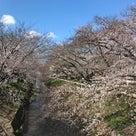 4/1夜桜ランのご案内の記事より