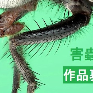 バーテック、公募展「害蟲展」に協賛!の画像