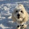 愛犬と雪遊び 2の画像