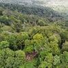 ビンタン山トレッキング & 椰子酒「Tua」体験の画像