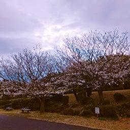 画像 桜 の記事より 2つ目