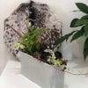 観葉植物の制作会の画像