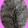 ◆桜◆の画像