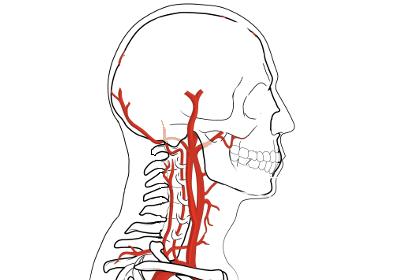 自律神経の乱れ・首