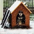 雪が降りました!の記事より